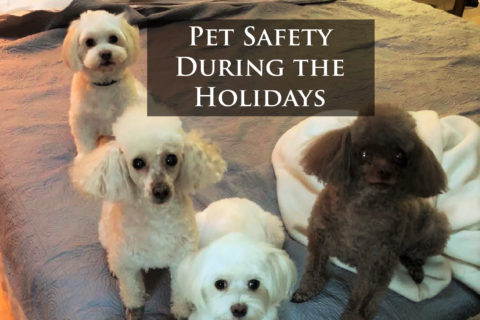 Signature Tips: PET Safety During the Holidays!