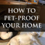 How to pet-proof your home!